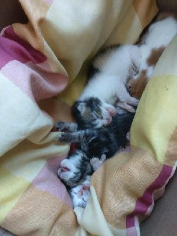 Adoptar este gato