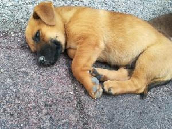 Adoptar este perro